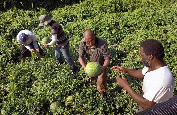 Американские фермеры теряют урожай из-за задержек в выдаче виз иностранным работникам