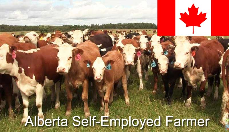 Иммиграция в Канаду по программе провинции Альберта Self-Employed Farmer