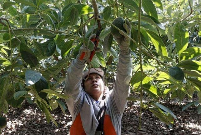 Новая Зеландия нуждается в трудовых мигрантах