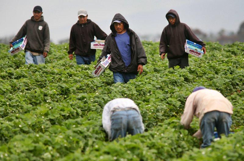 Рабочие-иммигранты необходимы для стран Запада