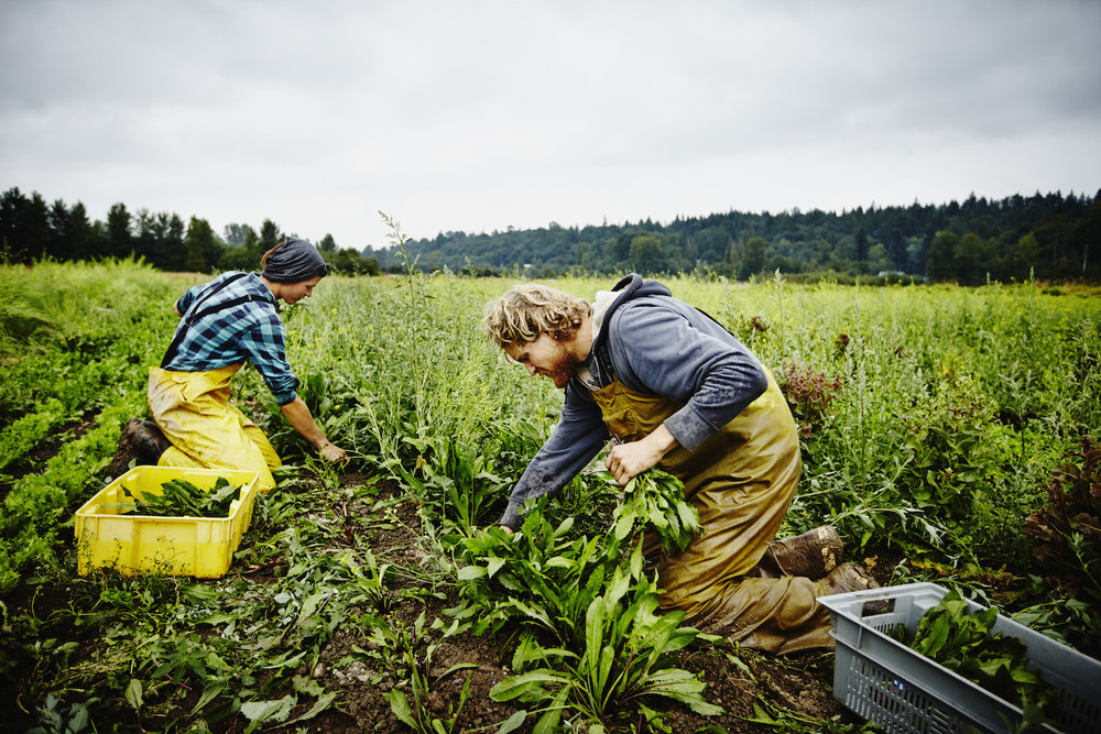 Онтарио открывает новую иммиграционную программу для иностранных работников сектора сельского хозяйства и строительства