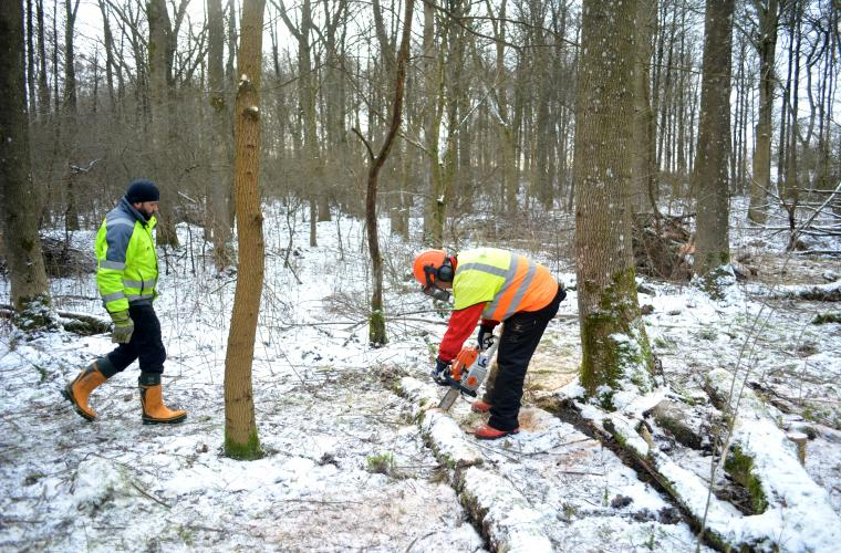Швеция запустила проект «Зелёная работа» для новых иммигрантов
