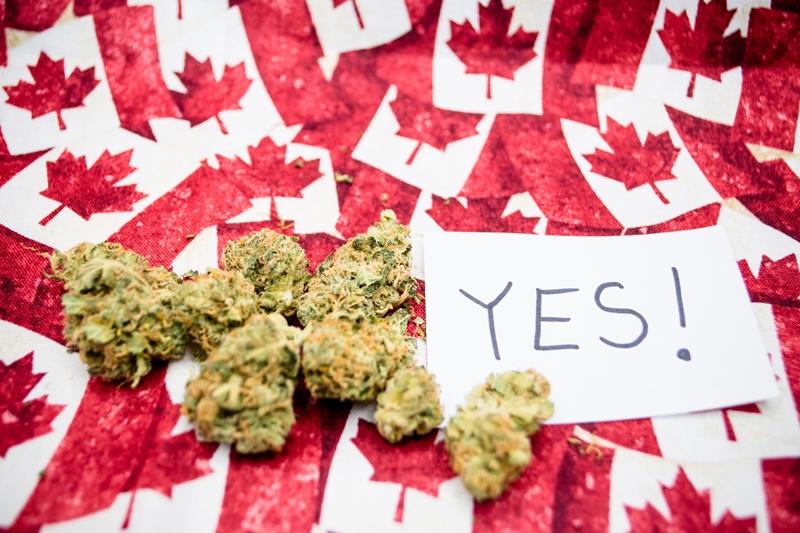 Правила приобретения, употребления и выращивания марихуаны в провинциях Канады