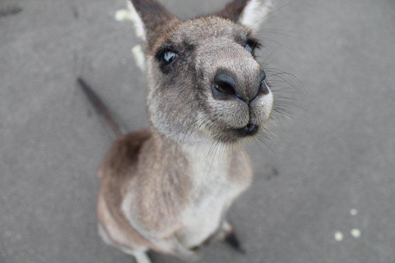 10 главных мифов об Австралии и их развенчание