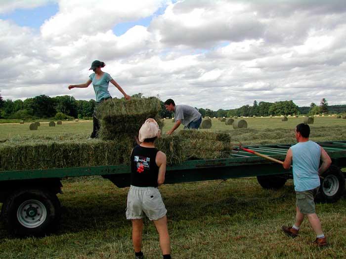 Сезонная сельхозработа в США: какие шансы получить визу H-2A?