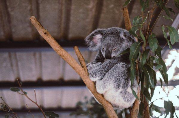 Лучшие статьи недели: пособия, недвижимость и работа в Австралии