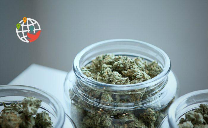 Эта канадская провинция продала больше марихуаны, чем любая другая