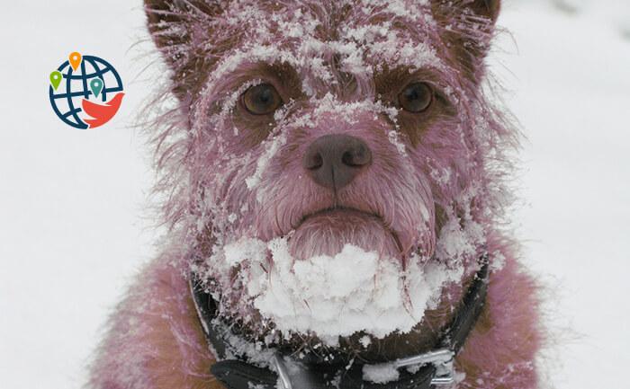 7 мифов о холодной Канаде