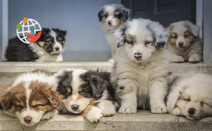 Канада запретила ввозить в страну щенков из Украины