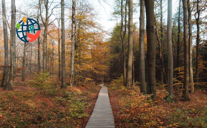 6 волшебных прогулочных троп в Онтарио