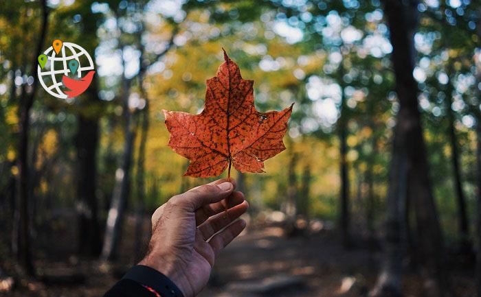 В Министерстве иммиграции Канады упростили правила подачи документов на ПМЖ