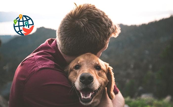 Впервые в Канаде у собаки подтвердился COVID-19