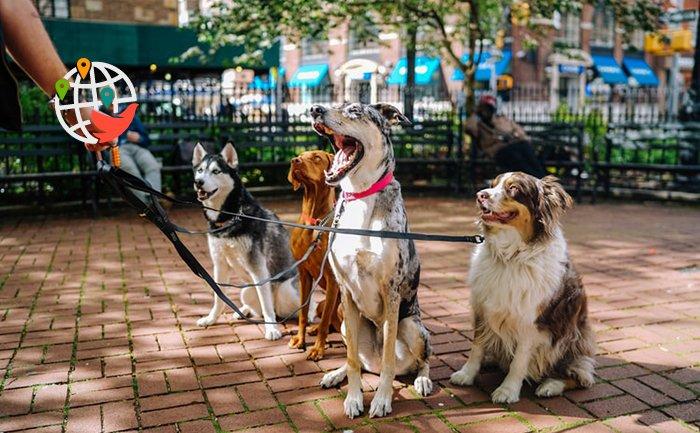 В Онтарио выгульщики собак попали в выгодное положение