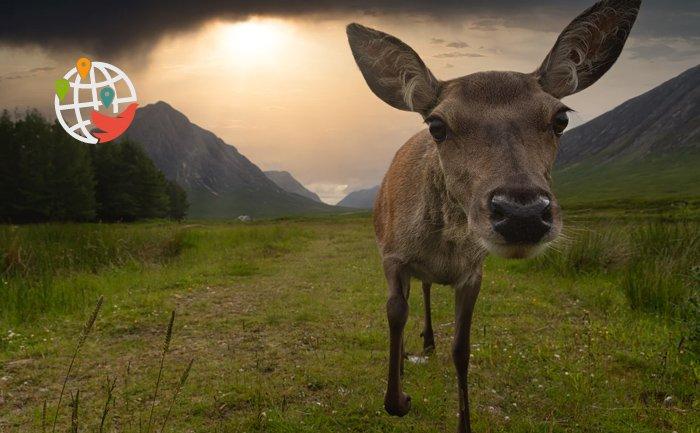 Неожиданный гость: олень пробрался в дом через собачью дверь и устроил дебош