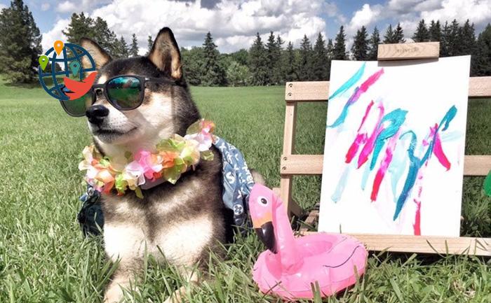 Рисующая собака из Альберты