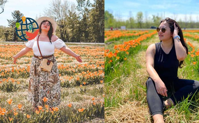 Ферма тюльпанов в Оттаве