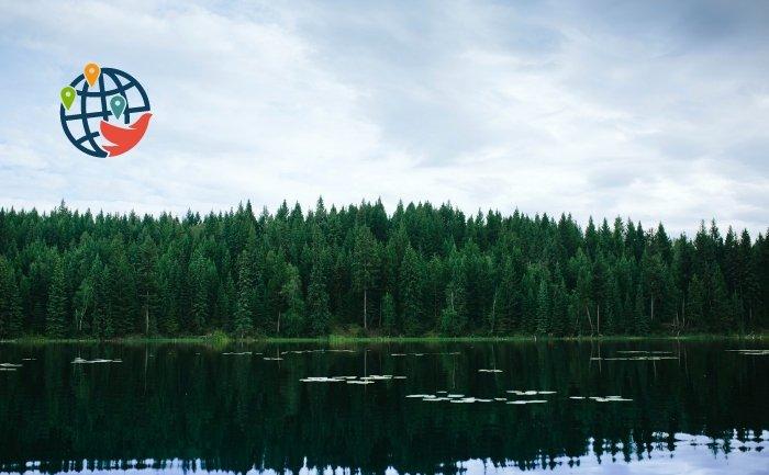 Операция по спасению лесов Британской Колумбии
