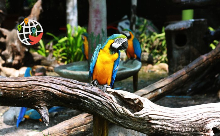 Зоопарк Торонто возобновляет работу