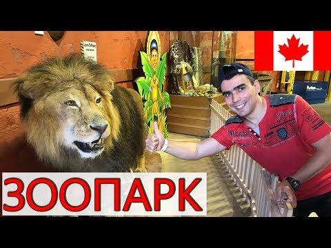 Канадский зоопарк + парк динозавров + аквапарк