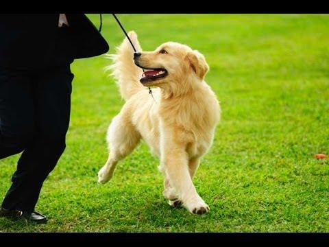 О содержании собак и канадских собачниках