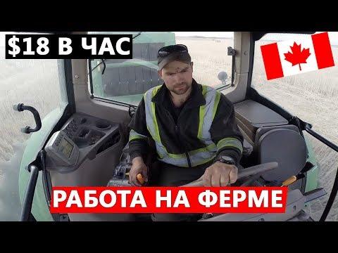 Работа фермером в Канаде