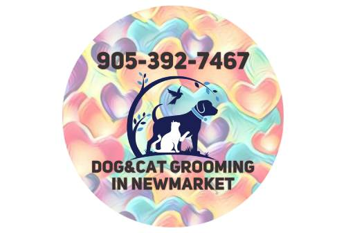 Dogs & Cats Grooming in Newmarket